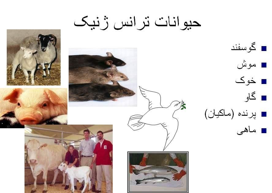 پاورپوینت بررسی حیوانات ترانس ژنیک